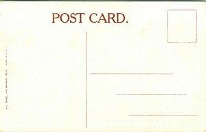 Vtg Postcard Pre-1910 Texas Long Horn Steer Width of Horns 9 Ft. 6 In