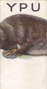 Cigarette Card Wills 1934 Animalloys No 26 YPU of PLATYPUS