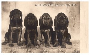 Dog ,  Bloodhounds , Pinkerton's by Birth