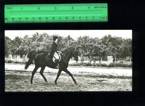 169083 Trakehner HORSE Pepel PETUSHKOVA equestrian OLD PHOTO