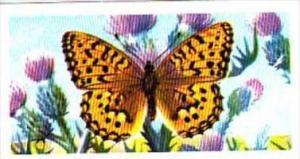 Brooke Bond Tea British Butterflies No 13 Dark Green Fritillary