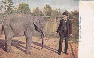 Illinois Chicago Lincoln Park Zoo Elephant