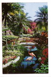 Flamingos at Footbridge, Sunken Gardens, St Petersburg, Florida,