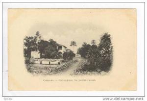 CONAKRY, Guinea, 00-10s  Camayenne. Le Jardin d'essai