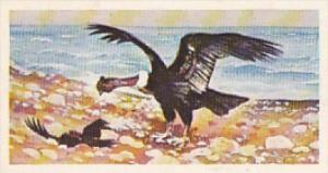 Brooke Bond Vintage Trade Card Wonders Of Wildlife 1976 No 49 South American ...