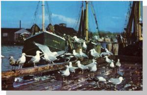 Quaint Cape Cod, Mass/MA Postcard, Seagulls/Boat/Dock