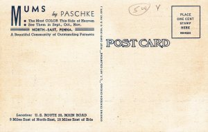MUMS by Paschke, Near ERIE , Pennsylvania , 30-40s
