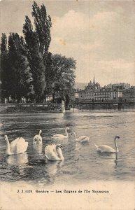 Switzerland Geneve Les Cygnes de l'Ile Rousseau Swan Birds Postcard
