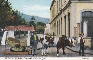 Oxen Cart, Carro De Bois, Madeira, Portugal, 1900-1910s