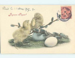 1907 Easter foreign BABY CHICKS WITH EGGS AND PUSSYWILLOW HL8817