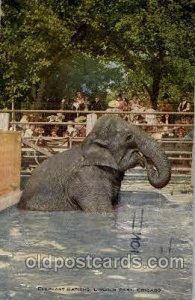 Lincoln park Chicago Illinois, USA Elephant, Elephants, Postcard Post Card Li...