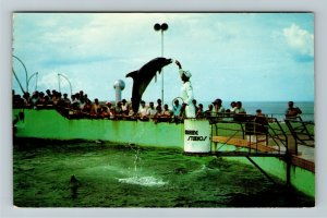 Marineland FL- Florida, Feeding Time at Marine Studios, Chrome Postcard