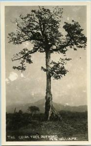 Honduras - The Ceiba Tree, Republic of Honduras   *RPPC