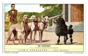 Greyhounds and Poodle, Dog Breeds II Liebig Belgian Trade Card *VT28C