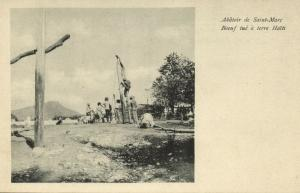 haiti, SAINT-MARC, Slaughterhouse, Cow being Killed (1899)