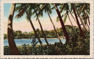 Coastal Palms Fiji Palm Trees UNUSED Vintage Linen Postcard D99