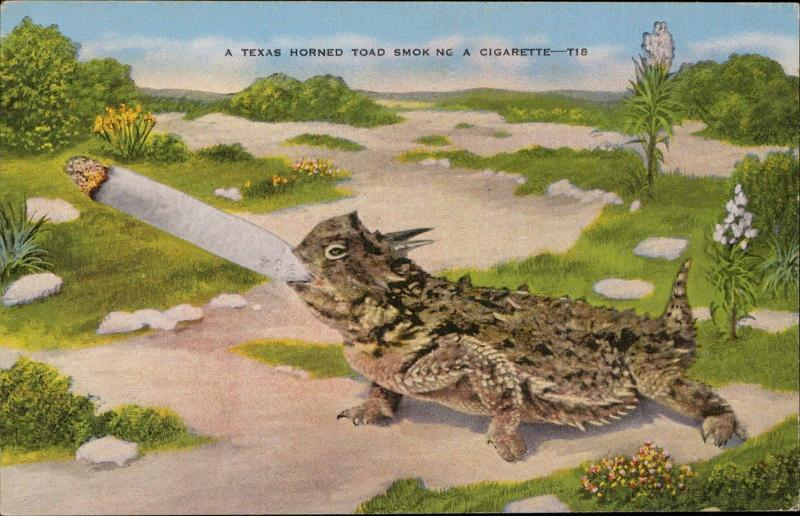 Texas Horned Toad Smoking a cigarette