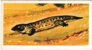 Trade Cards Brooke Bond Tea Prehistoric Animals No06