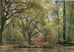 Woodland Lake in Dixieland SOuth Woodlands Forest Trees   Postcard  # 6964