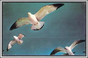 New England - Sea Gulls Along The Coast - [MX-083]