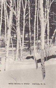 New Hampshire Intervale White Birches in Winter Albertype