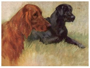 Dog , Irish Setter and Labrador Retriver