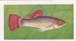 Pukka Tea Vintage Trade Card Aquarium Fish 1961 No 26 Liberty Molly