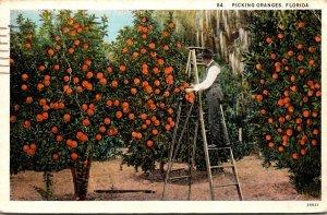 Florida Picking Oranges 1928 Curteich