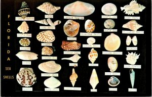 Postcard Florida Sea Shells Identification Dodison's Shell Shop Unposted 1520