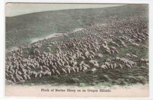 Merino Sheep Flock Ranch Ranching Farming Oregon 1909 postcard