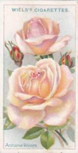 Wills Vintage Cigarette Card Roses A Series 1912 No 38 Antoine Rivoire