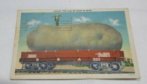 Vintage 1943 Postcard Potato The Kind We Raise In Maine Collectible