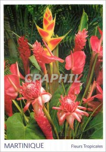 Modern Postcard Martinique Tropical Flowers