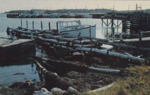 View from Shag Harbour, South Shore, Nova Scotia,Canada, 40-60s