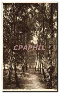 Postcard Former Wimbledon Common Silver Birches