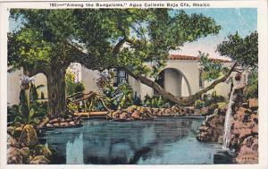 Mexico Among The Bungalows Agua Caliente Baha