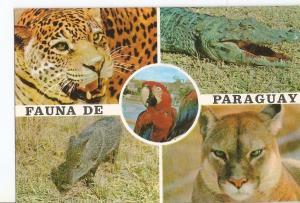 Postal 030684 : Paraguay. Fauna