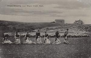MAPLE CREEK , Saskatchewan, Canada , 00-10s ; Sheep Shearing