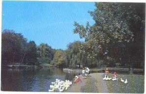 Feeding Ducks at McKinley Park in Canton Pennsylvania PA