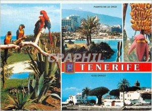 Postcard Modern Tenerife Various aspects Parrot Icod Drago Puerto de la Cruz