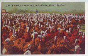 P832 ca1930-45 rockingham county w. virginia a flock of turkeys