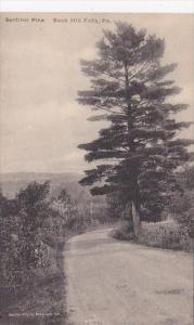 Sentinel Pine Buck Hill Falls Pennsylvania Albertype