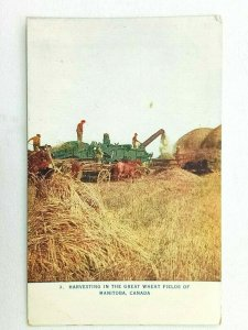 Vintage Postcard 1911 Harvesting in the Great Wheat Fields of Manitoba Canada