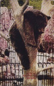 Bear Pit Lincoln Park Zoo Chicago Illinois 1914