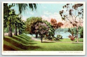 Los Angeles CA~Westlake Park~Path Thru Flowering Trees~1904 Detroit Pub #8593