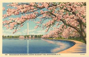 Washington Monument & Cherry Blossoms Washington DC Linen