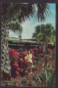 Silver Springs,FL Postcard BIN