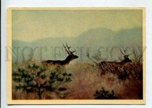 429753 USSR hunting Tajikistan Bactrian deers 1958 year russian postcard