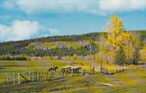 Caribou Historic Site British Columbia Canada