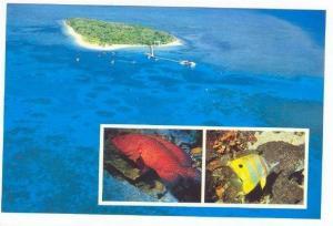 Barrier Reef Island, Coral & Fish, Australia, 1970-80s